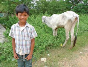 a boy takes care of a cow provided by the project